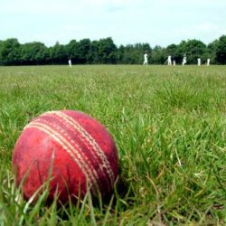 Cricket image from Free Images dot com-cropped & compressed1164891