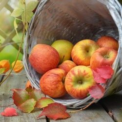 apples & leaves-1776744_640 cropped